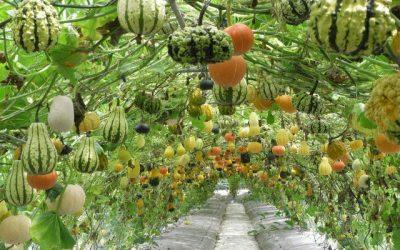 Permaculture : du jardinage, mais pas que…